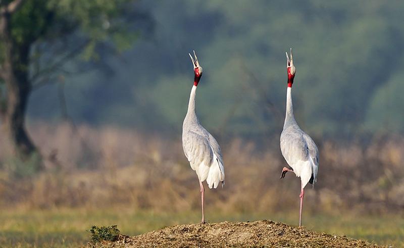 Band-Baretha-Wildlife-Sanctuary